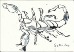 Skorpion 1 - 12 x 17 cm - Tsuche auf Bütten (c) Zeichnung von Susanne Haun