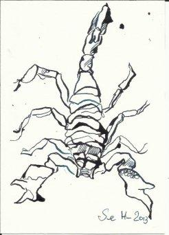 Skorpion 3 - 12 x 17 cm - Tsuche auf Bütten (c) Zeichnung von Susanne Haun