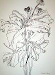 Lilie - 40 x 30 cm (c) Zeichnung von Susanne Haun