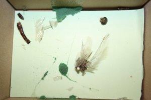 Die Libelle hat die Reise nur in Stücken überstanden  (c) Foto von Susanne Haun