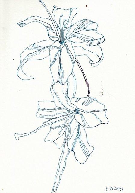 Lilie - 22 x 17 cm (c) Zeichnung von Susanne Haun
