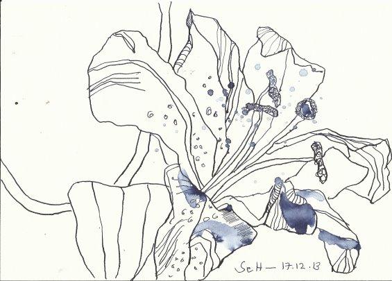 Lilie Version 1 (c) Zeichnung von Susanne Haun