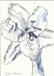 Lilie Version 3 (c) Zeichnung von Susanne Haun
