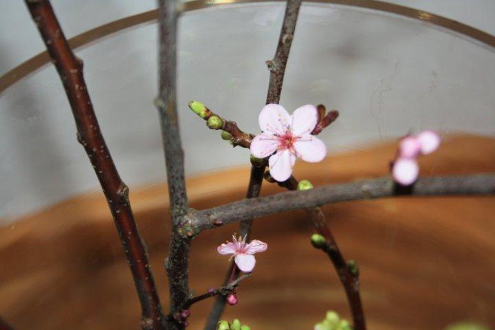 Büten an Zweige (c) Foto von Susanne Haun
