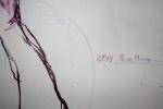 Ich signiere in der Mitte des Bildes Nun bin ich zufrieden (c) Zeichnung auf Leinwand von Susanne Haun