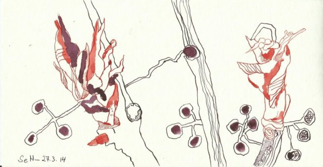 Wein Version 3 (c) Zeichnung von Susanne Haun