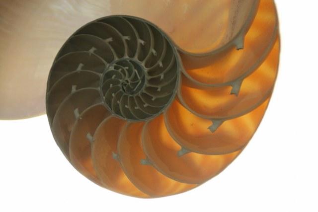 Nautilusmuschel (c) Foto von Susanne Haun