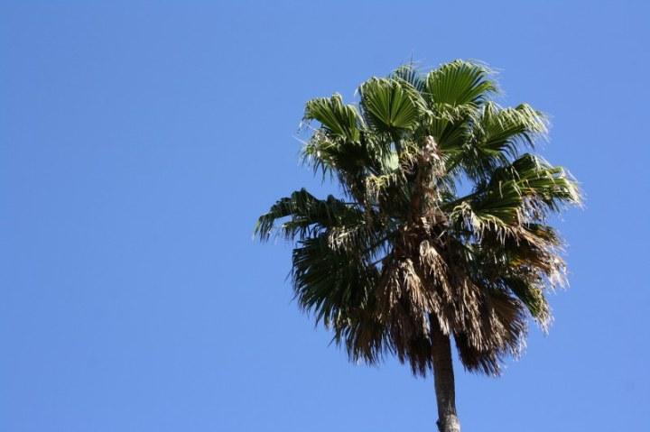 Auch Palmen gibt es auf den Straßen Barcelonas (c) Foto von Susanne Haun