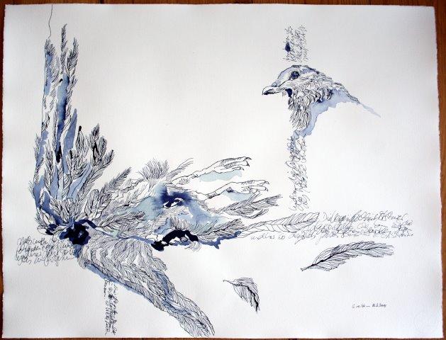 Der zerlegte Vogel - 60 x 80 cm - Tusche auf Bütten - 800 Euro (c) Zeichnung von Susanne Haun