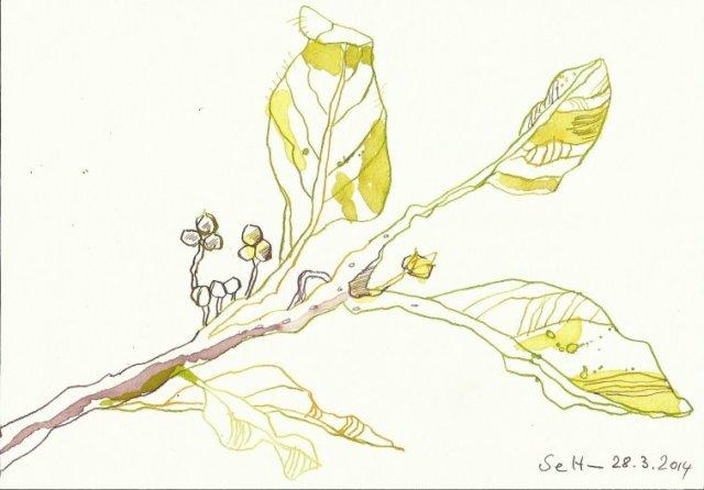 Erstes Grün Version 1 (c) Zeichnung von Susanne Haun