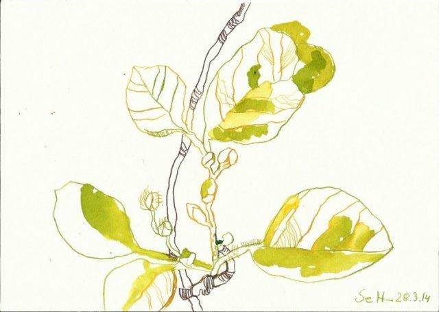 Erstes Grün Version 2 (c) Zeichnung von Susanne Haun