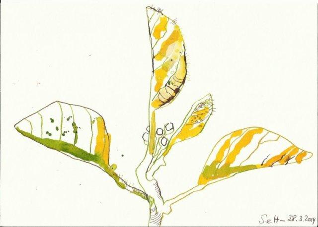 Erstes Grün Version 3 (c) Zeichnung von Susanne Haun