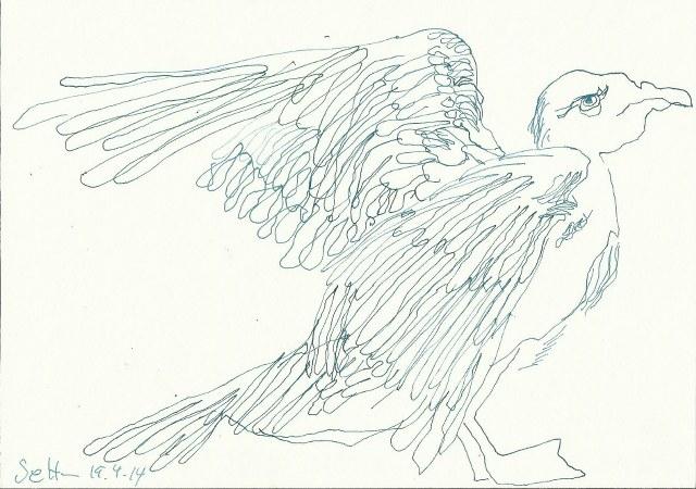 Tauben Version 1 (c) Zeichnung von Susanne Haun