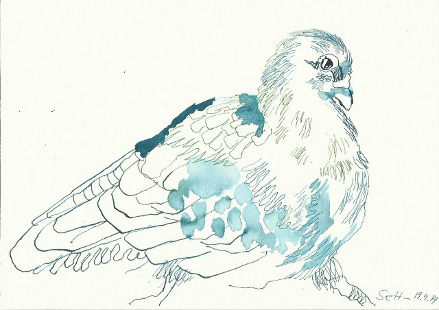 Tauben Version 3 (c) Zeichnung von Susanne Haun