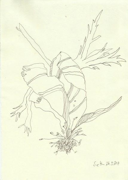 Anemone Version 2 (c) Zeichnung von Susanne Haun
