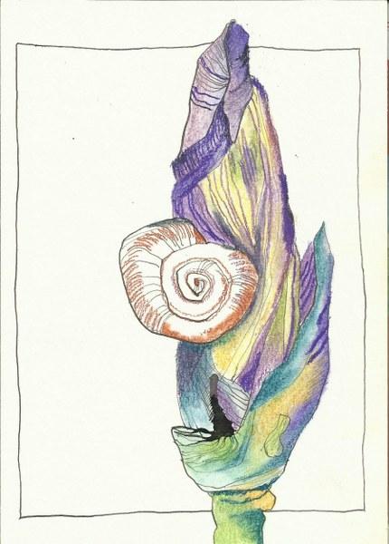 Iris Version 3 mit Pastell (c) Zeichnung von Susanne Haun