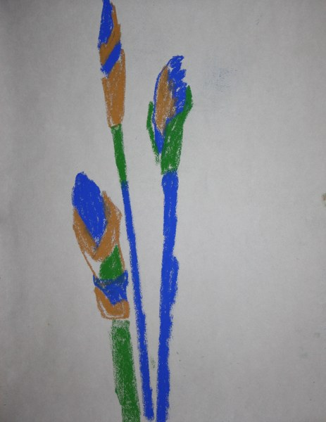 Irisknospen 48 x 40 cm (c) Zeichnung von Susanne Haun