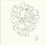 Zapfen Version 3 (c) Zeichnung von Susanne Haun