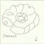 Ammonit Version 1 (c) Zeichnung von Susanne Haun