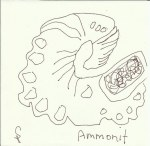Ammonit Version 3 (c) Zeichnung von Susanne Haun
