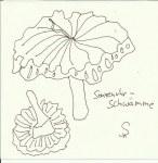 Sonnenuhr - Schwämme (c) Zeichnung von Susanne Haun
