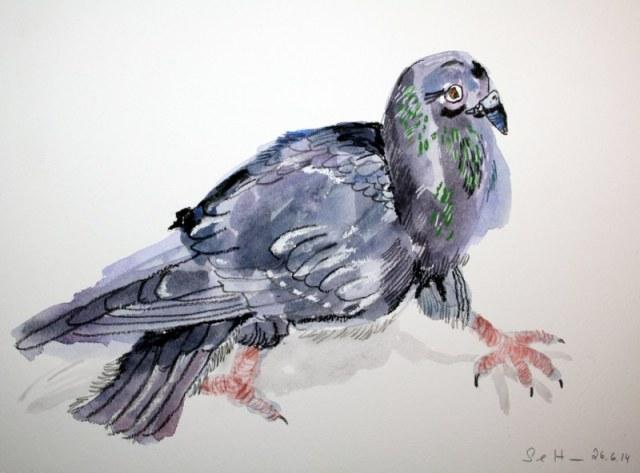 Taube - Zeichnung von Susanne Haun