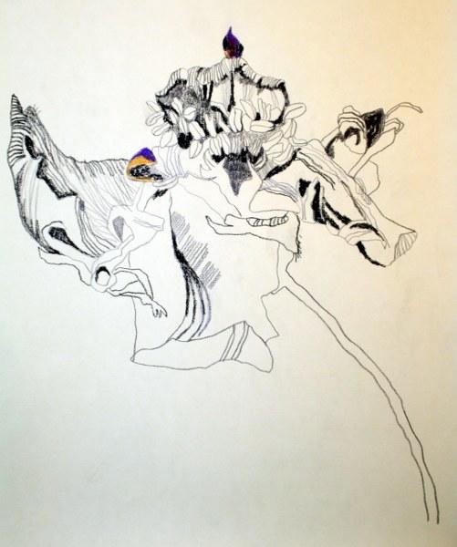 Verblühte Anemone (c) Zeichnung von Susanne Haun