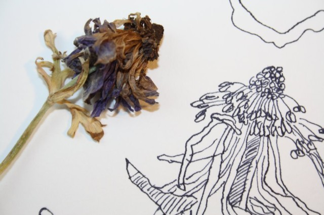 Das Vergehen der Zeit - Ausschnitt Anemone - Entstehung Zeichnung (c) Susanne Haun
