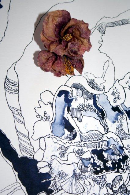 Ausschnitt Verblühter  Hibiskus - Tusche auf Bütten - 60 x 80 cm (c) Zeichnung Susanne Haun