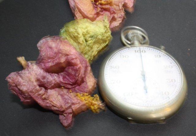 Das Vergehen der Zeit (c) Foto von Susanne Haun
