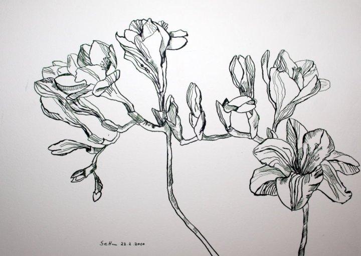 Fresien - Tusche auf Bütten - 30 x 40 cm (c) Zeichnung von Susanne Haun