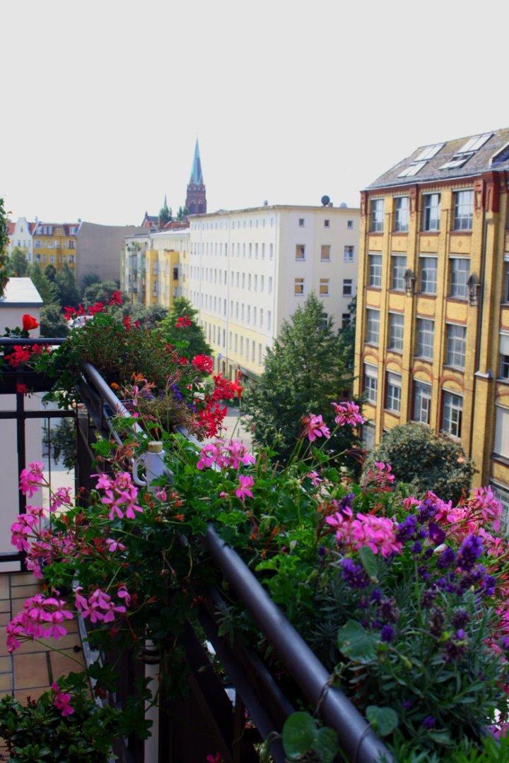 Geranien auf meinem Balkon (c) Foto von Susanne Haun