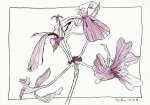 Hängegeranie Version 1 (c) Zeichnung von Susanne Haun