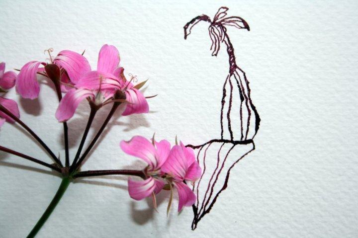 Entstehung Zeichnung einer Geranie - 30 x 20 cm - Tusche auf Hahnemühle Büttenpapier (c) Zeichnung von Susanne Haun