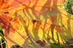 Blätter im Licht (c) Foto von Susanne Haun