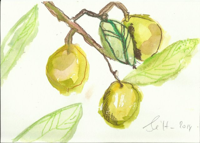 Oliven - Aquarell und Pastellstift (c) Zeichnung von Susanne Haun