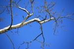 Zweige wie eine bizarre Zeichnung (c) Foto von Susanne Haun