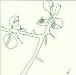 Pflanzen im Schnee Vers 3 (c) Zeichnung von Susanne Haun
