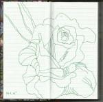 Rosenknospe Vers. 2 (c) Zeichnung von Susanne Haun
