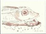 1 Fisch (c) Zeichnung von Susanne Haun