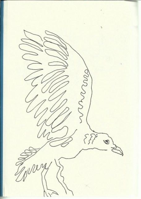 Möwe (c) Zeichnung von Susanne Haun
