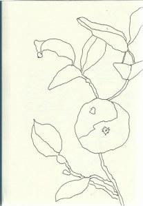Orangen (c) Zeichnung von Susanne Haun