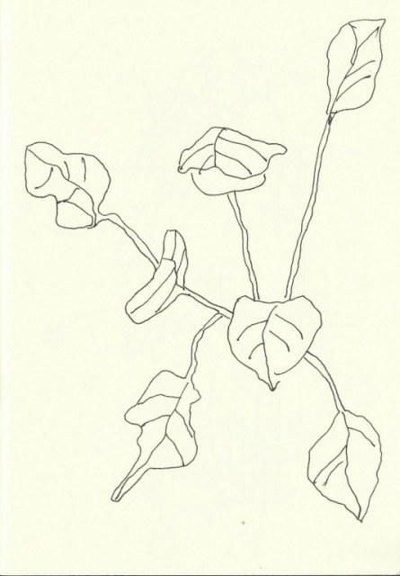 Jardin Majorelle - Marrakesch (c) Zeichnung von Susanne Haun