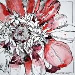 Rote Zinie (c) Zeichnung von Susanne Haun