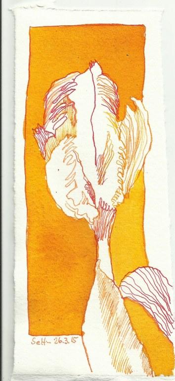 gelbe tulpe c zeichnung von susanne haun 0002 susanne haun. Black Bedroom Furniture Sets. Home Design Ideas