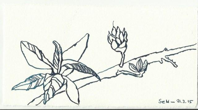 Natur (c) Zeichnung von Susanne Haun 0004