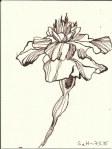 Tegetes (c) Zeichnung von Susanne Haun