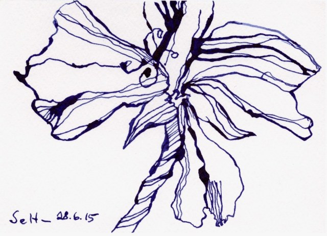 Geranie (c) Zeichnung von Susanne Haun