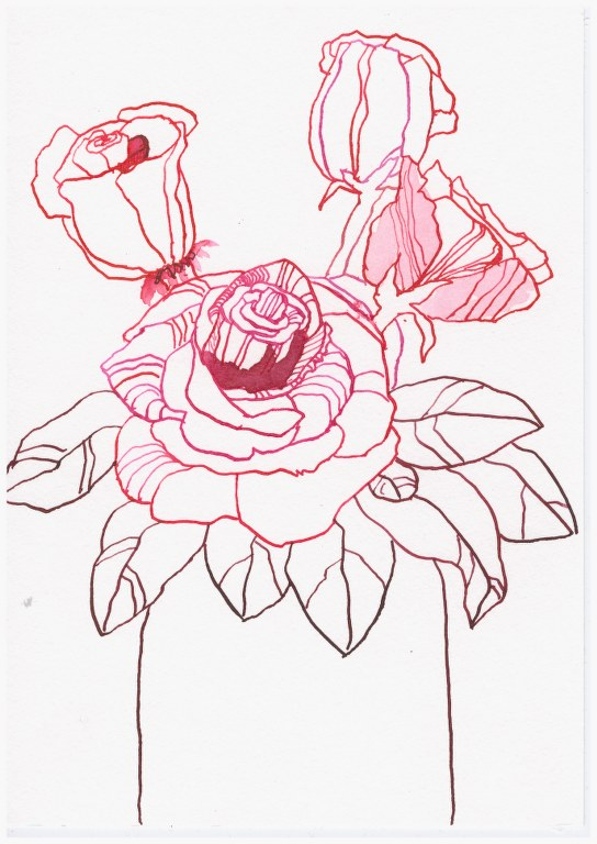 Sommer Rosen - Tusche auf Hahnemühle Burgund - 22 x 17 cm (c) Zeichnung von Susanne Haun