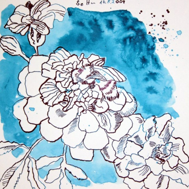 Tagetes - 20 x 20 cm - Tusche auf Bütten (c) Zeichnung von Susanne Haun